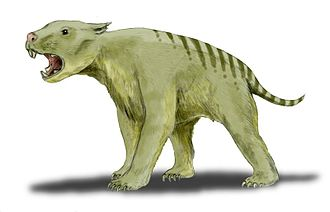 """Fossil Cave - Reconstruction of Thylacoleo carnifex, the """"Marsupial Lion"""", remains of which have been found in the cave"""