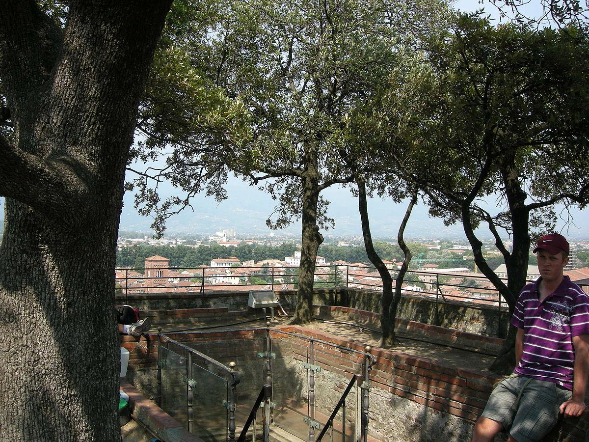 Guinigi Tower Wikipedia