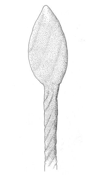 Tortilicaulis - Image: Tortilicaulis transwalliensis reconstruccion