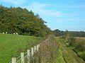 Towards Newbarns Wood - geograph.org.uk - 579056.jpg