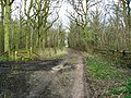 Track into Plain Copse, near Green Hill - geograph.org.uk - 1222522.jpg