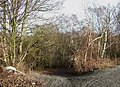 Track to the Clay Pits, near Kingswinford, Staffordshire - geograph.org.uk - 643010.jpg
