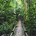 Trail Of Swamp Forest - panoramio.jpg