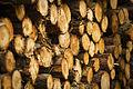 Tree harvest (4604085521).jpg