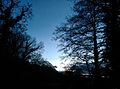 Trees closing in with the night - panoramio.jpg