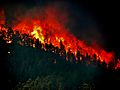 Trees torching - High Park Wildfire.jpg