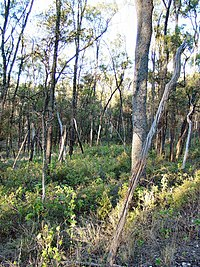Trgole NP Ooline Trees DSC03274.JPG