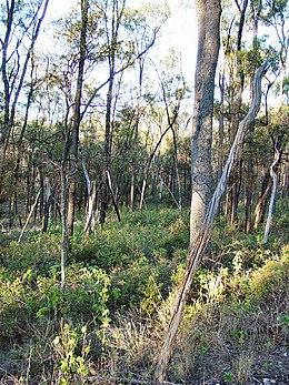 Trgole NP Ooline Trees DSC03274