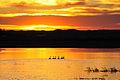 Trumpeter swans at sunset Lacreek National Wildlife Refuge (13608801395).jpg
