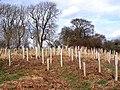 Tuley tubes near Catheugh - geograph.org.uk - 1802129.jpg