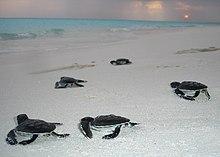 Noonu Atoll Wikipedia