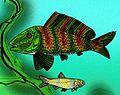 Uarbryichthys latus.jpg