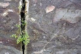 Unica-Bruch-Villmar Abbau-Wand geschliffen.jpg