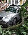 Unwetterschaden baum auf auto 2009.jpg