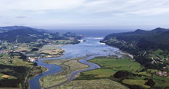 Marine biology - Estuaries have shifting flows of sea water and fresh water.