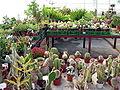 VU botanikos sodas. Siltnamis, 2006-10-18.jpg