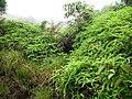 Vagamon Grass lands - panoramio (5).jpg