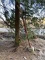 Vanha palokaivon merkki Espoossa.jpg