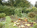 Vegetable garden at Hill Top in October - geograph.org.uk - 1006399.jpg