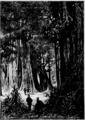Verne - La Maison à vapeur, Hetzel, 1906, Ill. page 146.png