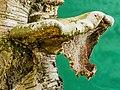 Versteende berkendoder (Piptoporus betulinus). 09-08-2020 (d.j.b.) 02.jpg