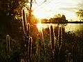 Veterans park lagoon - milwaukee.jpg