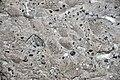 Vetulonaia sp. (fossil clams) in pebbly sandstone (Morrison Formation, Upper Jurassic; Carnegie Quarry, Dinosaur National Monument, Utah, USA) 1 (48771226963).jpg