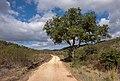 Via Algarviana footpath near Pincho, Bensafrim, Portugal (PPL1-Corrected) julesvernex2-2.jpg