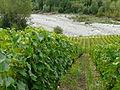 Vignoble de Marin 10.JPG