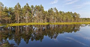 Viru Bog, Parque Nacional Lahemaa, Estonia, 2012-08-12, DD 60.JPG