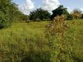 Vlakte van Waalsdorp (Waalsdorpervlakte) 2016-08-10 img. 516.png