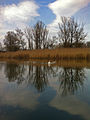 Vogelfreistätte Salzachmündung März 2014.jpg