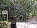 Waldweg im Grunewald (Woodland Path in Grunewald) - geo.hlipp.de - 28125.jpg