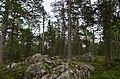 Walking trail, Inari, Finland (5) (36545529091).jpg
