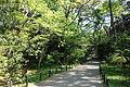 Walkway - Institute for Nature Study, Tokyo - DSC02069.JPG