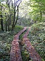 Walkway at Andrews Wood Nature Reserve - geograph.org.uk - 243018.jpg