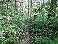 Wanderweg bei der Schwäbischen Alb - panoramio (3).jpg