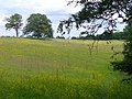 Wealden Field - geograph.org.uk - 843494.jpg