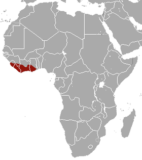 West African Long-tailed Shrew area.png