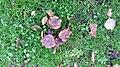 Westzaanplantsoen-paddenstoel (2).jpg