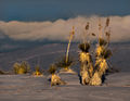 White Sands Sunset (4771972746).jpg
