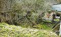 Wierzenica water mill, ruins (2).JPG