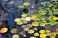 Wikipedia 13. Fotoworkshop Botanischer Garten Erlangen 2013 by-RaBoe 068.jpg