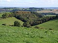 Woodland above Higher Nunnington Farm - geograph.org.uk - 1520795.jpg