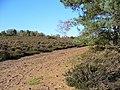 Yagden Hill - geograph.org.uk - 272474.jpg