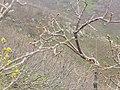 Yavru ayı saklandığı orman - panoramio.jpg