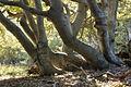 Zaruby forest.jpg