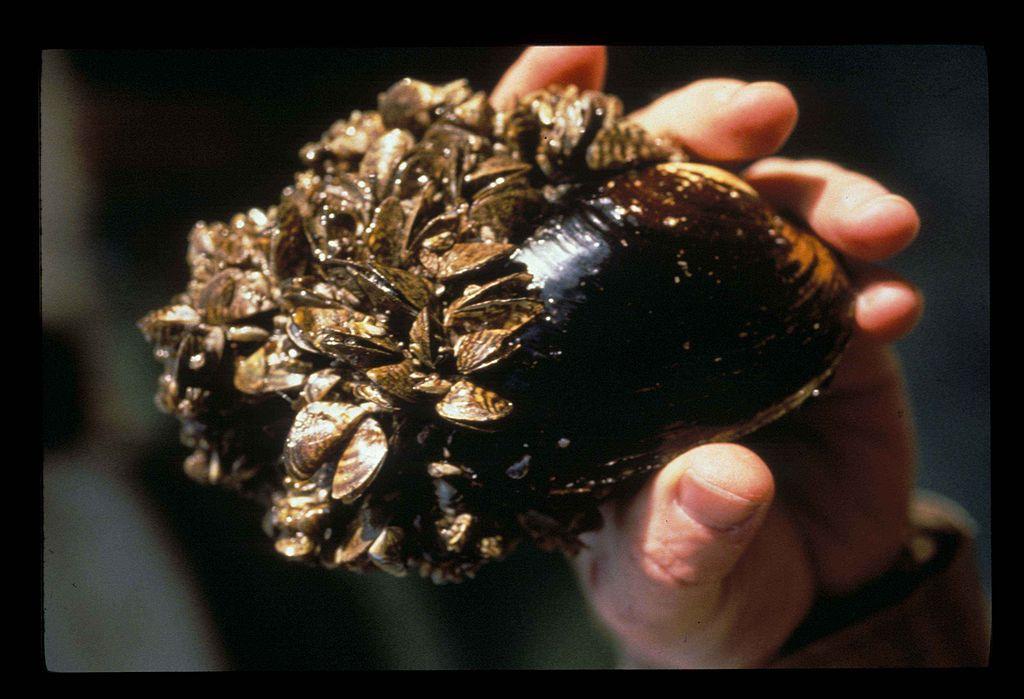 North Island Mussels Ltd Coromandel