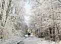Zima w lesie, Winter in forest.jpg