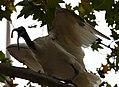 (1)Ibis Sydney 044.jpg